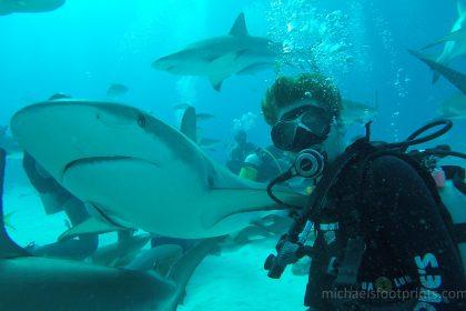 michaelsfootprints Michael's Footprints Bahamas Shark